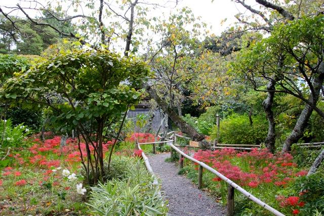 【英勝寺】鎌倉散歩 part 5_f0348831_19562070.jpg