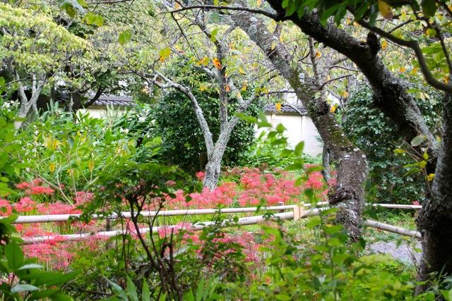 【英勝寺】鎌倉散歩 part 5_f0348831_19575746.jpg