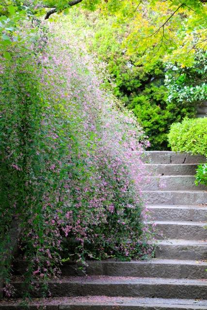 【英勝寺】鎌倉散歩 part 5_f0348831_19580134.jpg