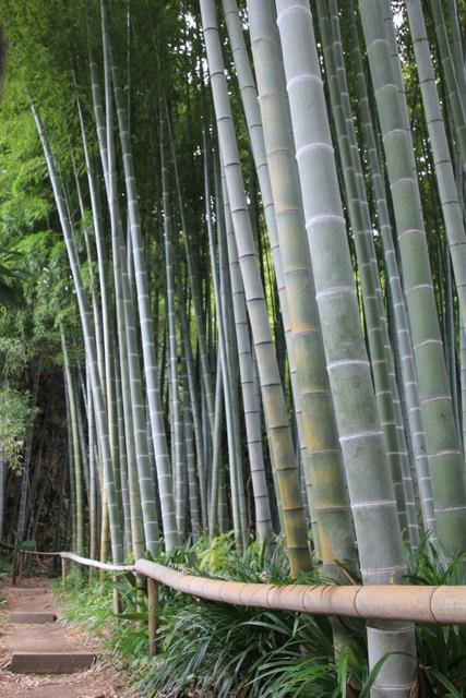 【英勝寺】鎌倉散歩 part 5_f0348831_19581912.jpg