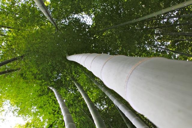 【英勝寺】鎌倉散歩 part 5_f0348831_19582447.jpg