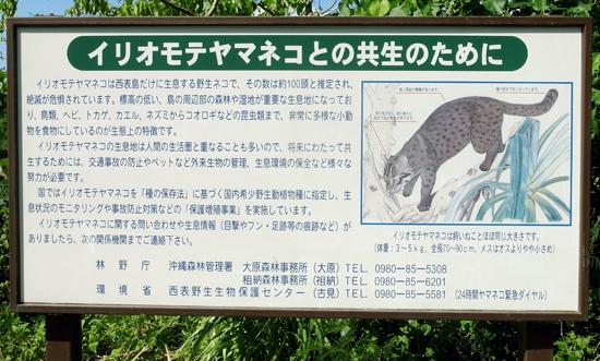 2014年9月『イリオモテヤマネコを手なずけよの旅』【2】_e0071652_12244197.jpg