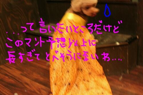 b0130018_19202499.jpg