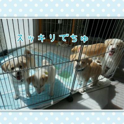 THE 子犬_b0207320_1101524.jpg