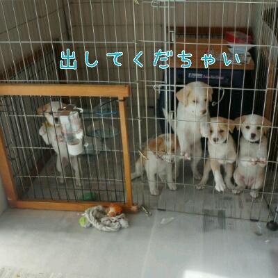 THE 子犬_b0207320_1121382.jpg