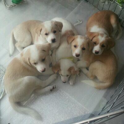 THE 子犬_b0207320_11525325.jpg