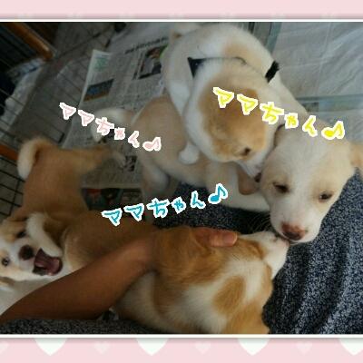 THE 子犬_b0207320_11582566.jpg