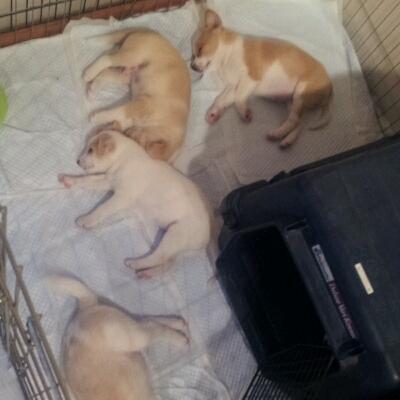THE 子犬_b0207320_1211537.jpg