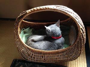 平常心の猫たち_b0199526_1412357.jpg