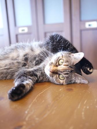猫のお友だち ワサビちゃん天ちゃんう京くん編。_a0143140_1924281.jpg