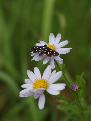 昆虫ハント_b0199742_6251138.jpg
