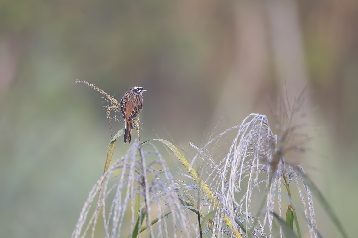 秋の湿原にて(12)_d0125872_23415010.jpg