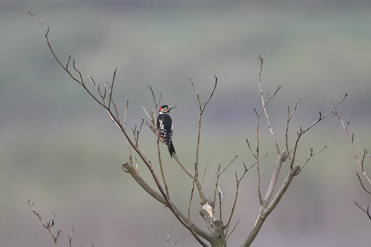 秋の湿原にて(12)_d0125872_234698.jpg
