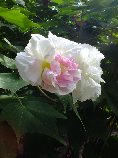 10月8日 大船植物園_e0145782_5433622.jpg