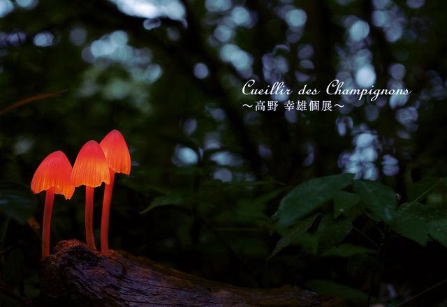 高野 幸雄さんの個展に行ってきました。_d0014014_1671817.jpg