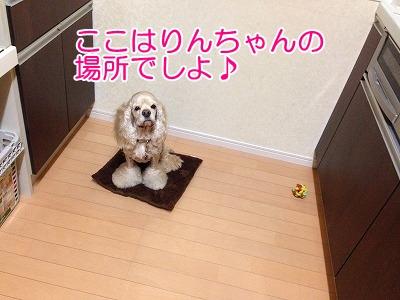 f0326925_21510465.jpg