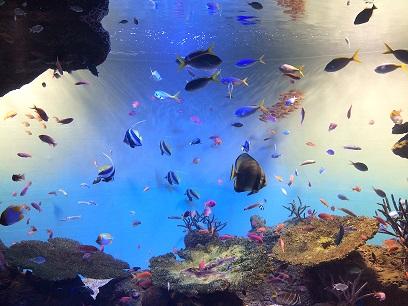 :: 水族館 ::_e0204865_16241825.jpg