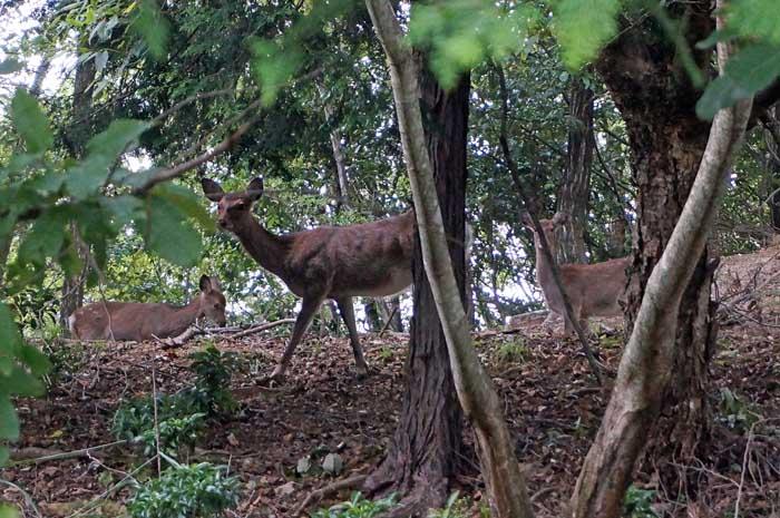 鹿の散歩_e0016894_14533416.jpg