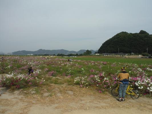 笠岡コスモス&ラーメンサイクリング_c0132901_18124034.jpg