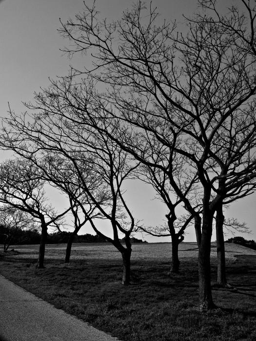 "monochrome \""海の中道海浜公園\""_f0315034_20512391.jpg"