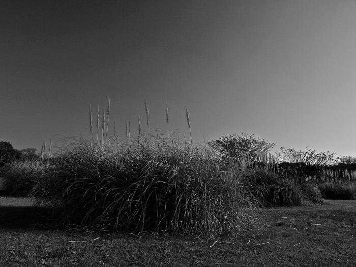 "monochrome \""海の中道海浜公園\""_f0315034_20535858.jpg"