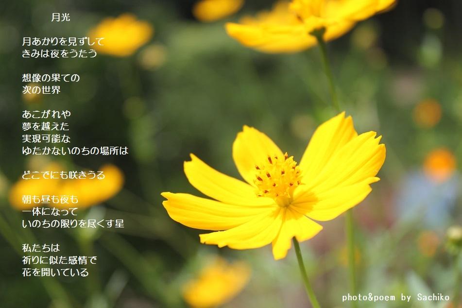 f0351844_11021478.jpg