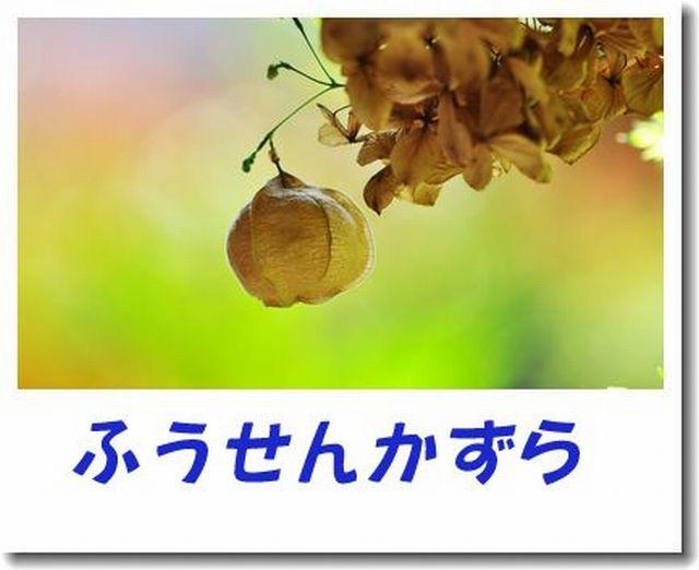d0089358_032461.jpg
