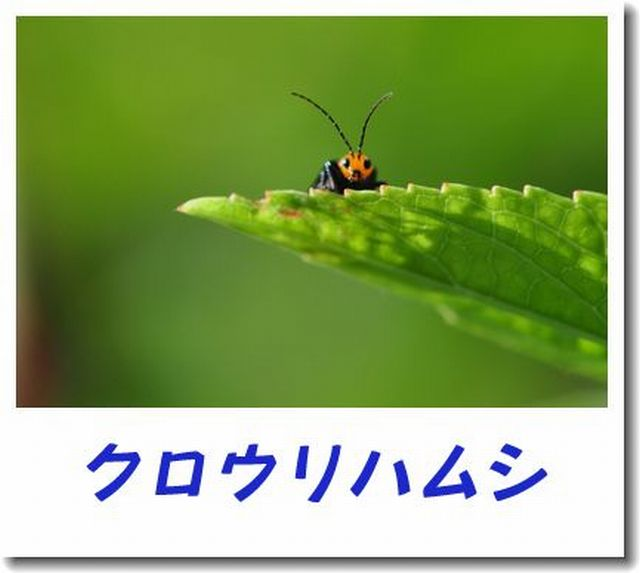 d0089358_082145.jpg