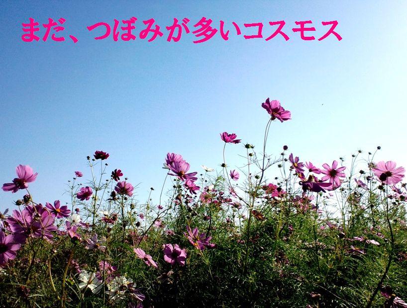 c0025171_1218570.jpg
