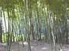 森林彩々_c0340785_15251629.jpg