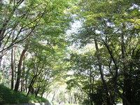 森林彩々_c0340785_15251652.jpg