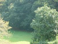 森林彩々_c0340785_15251663.jpg