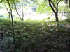 森林彩々_c0340785_15251681.jpg