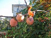 隣の客はよく柿食う鳥だ_c0340785_15263911.jpg