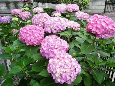 六月の雨_c0340785_15270796.jpg