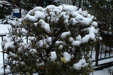 雪の日曜_c0340785_15273290.jpg