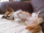 国際救助犬 チャリィ_c0340785_15274731.jpg