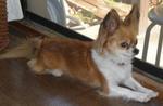 国際救助犬 チャリィ_c0340785_15274759.jpg