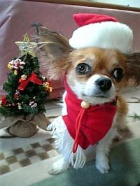 気の早いクリスマスだけど_c0340785_15275790.jpg