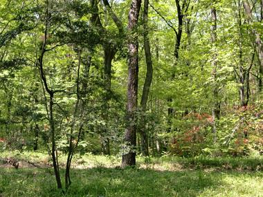 つかの間の森林浴にて_c0340785_15282409.jpg