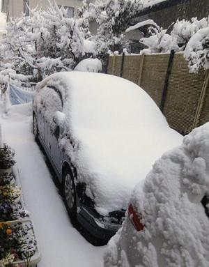 大雪とチョコ_c0340785_15293806.jpg