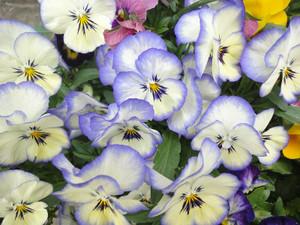 わが家の草花たち_c0340785_15294144.jpg