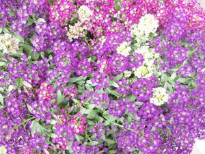 わが家の草花たち_c0340785_15294169.jpg