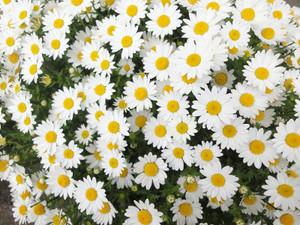 わが家の草花たち_c0340785_15294184.jpg