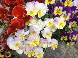 わが家の草花たち_c0340785_15294216.jpg