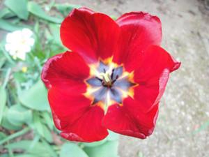 わが家の草花たち_c0340785_15294242.jpg