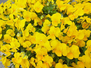 わが家の草花たち_c0340785_15294297.jpg
