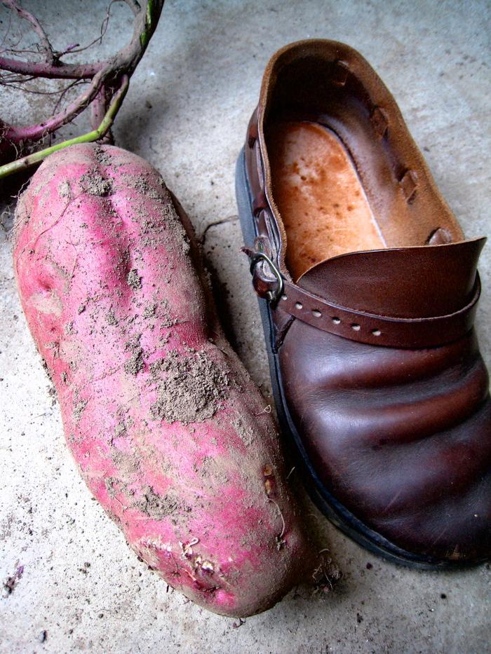 靴サイズ_e0303187_2185352.jpg