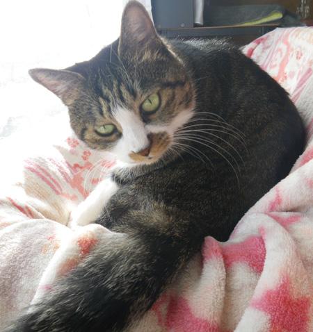 トイレ工事、ニャンズは猫部屋でおこもりさん_a0136293_17135828.jpg