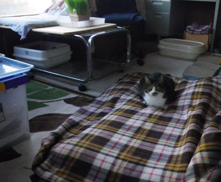 トイレ工事、ニャンズは猫部屋でおこもりさん_a0136293_1755783.jpg
